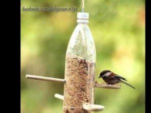 صورة اطعام الطيور والعصافير صدقة طريقة مرره حلوه وسهله وعندك في البيت unnamed file 490 300x225