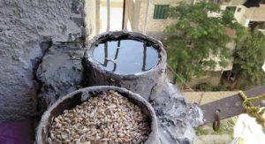 صورة اطعام الطيور والعصافير صدقة طريقة مرره حلوه وسهله وعندك في البيت unnamed file 492 300x163