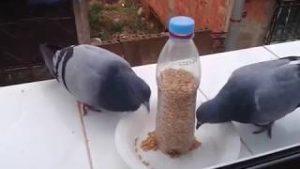 صورة اطعام الطيور والعصافير صدقة طريقة مرره حلوه وسهله وعندك في البيت unnamed file 493 300x169