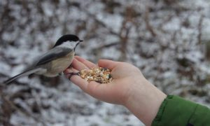 صورة اطعام الطيور والعصافير صدقة طريقة مرره حلوه وسهله وعندك في البيت unnamed file 494 300x180