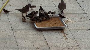 صورة اطعام الطيور والعصافير صدقة طريقة مرره حلوه وسهله وعندك في البيت unnamed file 495 300x169